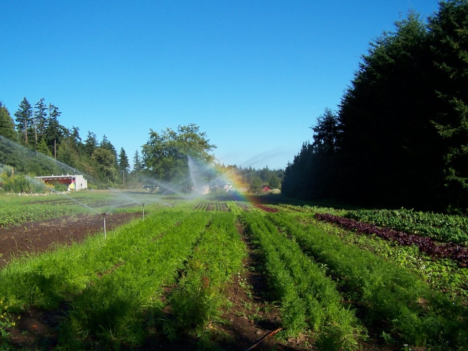 UBC farm 2